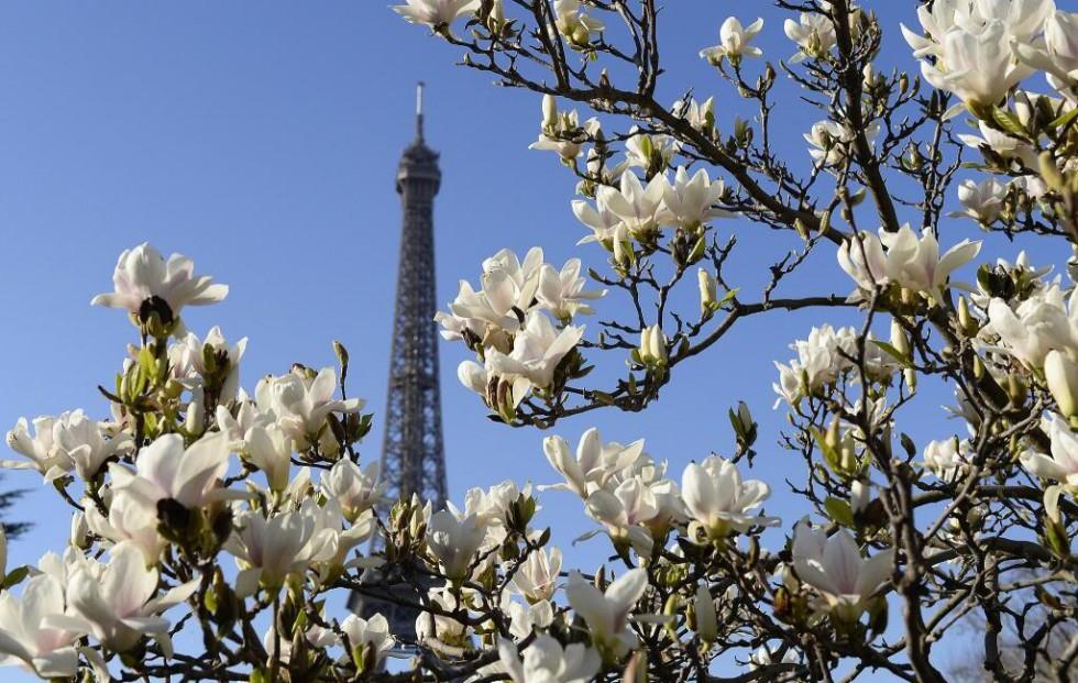Flowers-bloomed-around-Eiffel-Tower-Paris_zpsa988ed29
