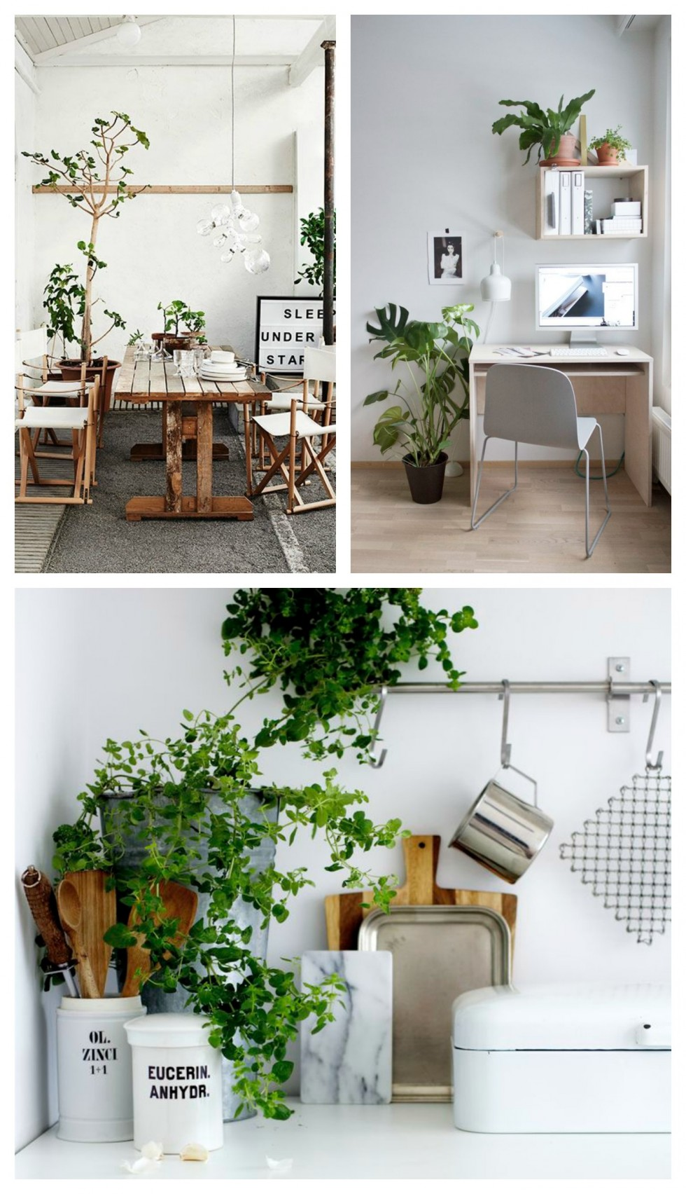 plants interior inspiration