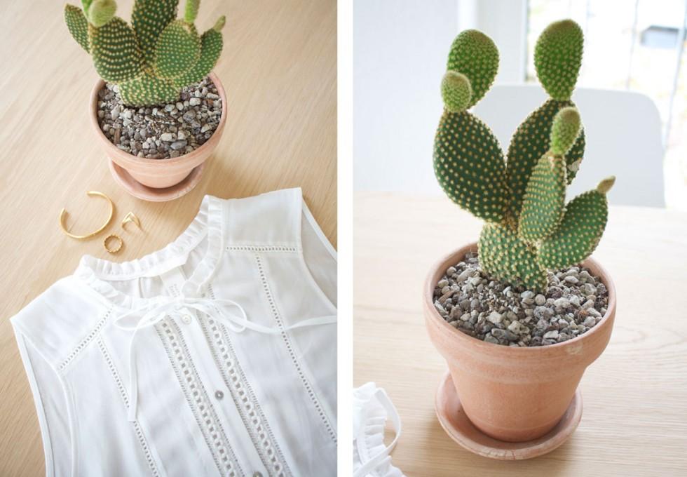 caktus-plant-blogger
