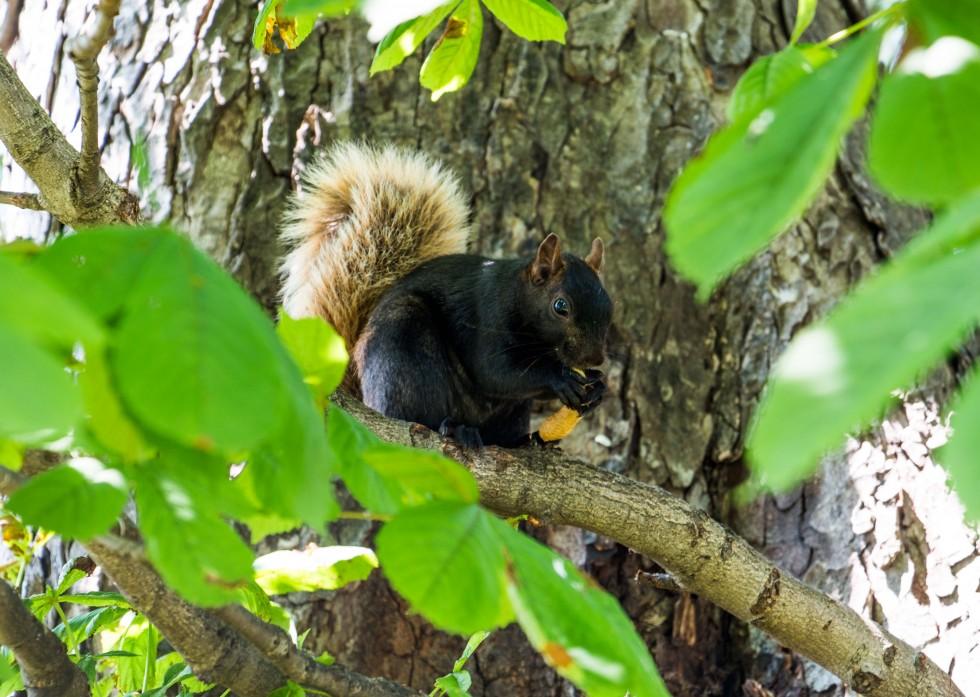 egern-peanut