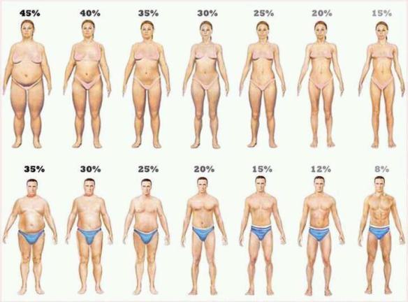 Fedt Kropsform og Fedtprocent Foto kilde ukendt søges