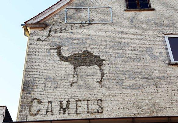 Flensburg_Camels_Marina_Aagaard_fitness_blog