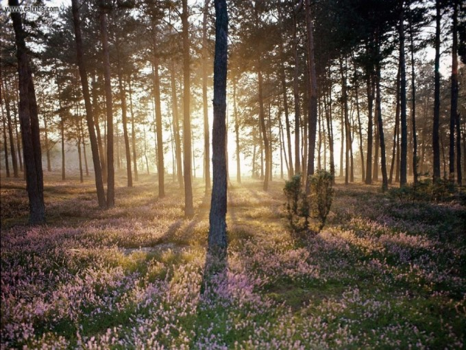 Sunlight_and_the_Wild_Forest_Floor_1280x960