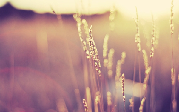 nature grass sunlight macro depth of field 1920x1200 wallpaper_wallpaperswa.com_21