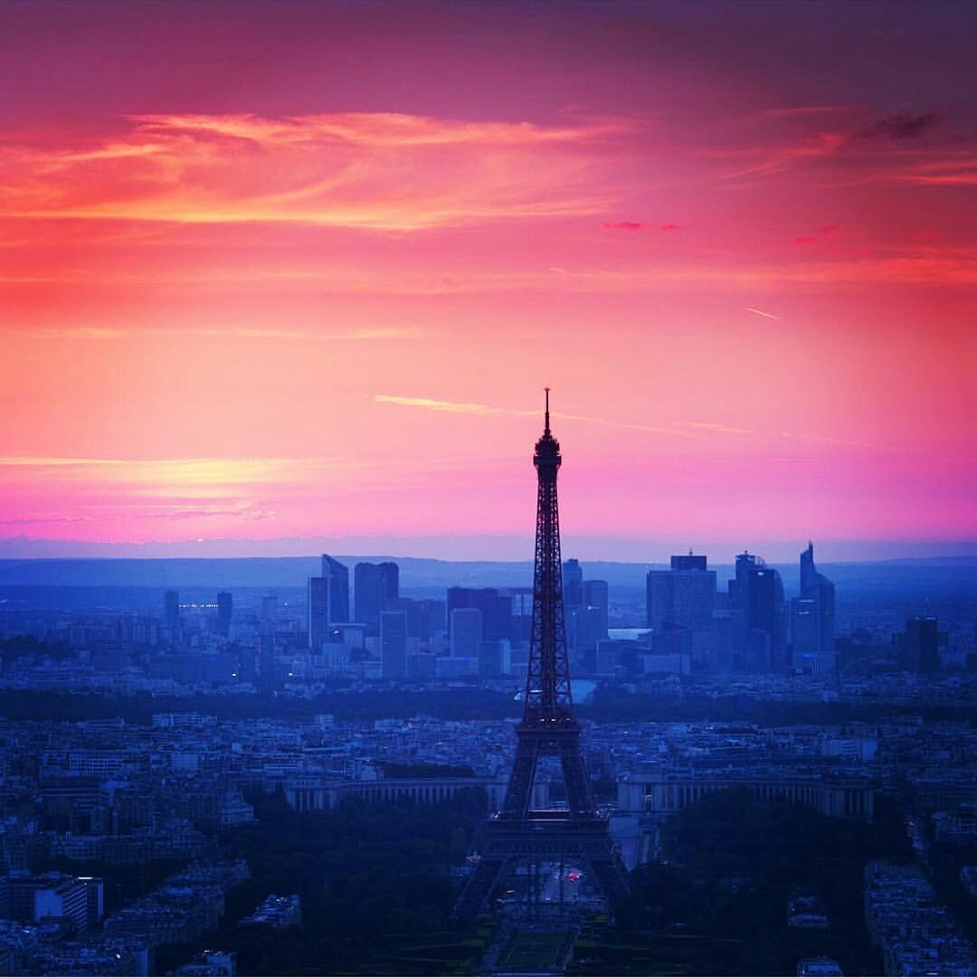 Paris, frk blomst, ferie, viola tranelund