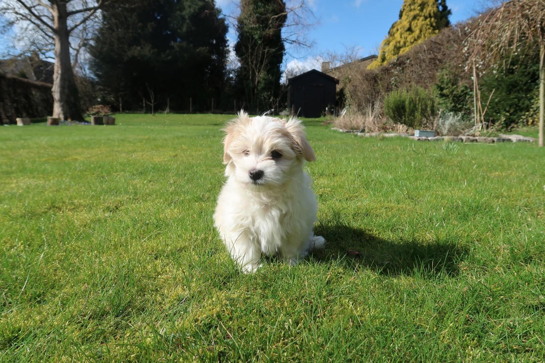 hund-i-haven