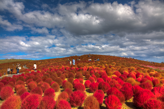 Five unusual places to visit Hitachi Seaside Park, Japan