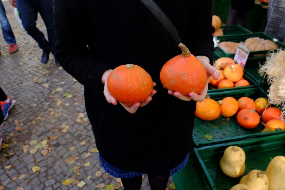 hokkaido autumn pumpkins