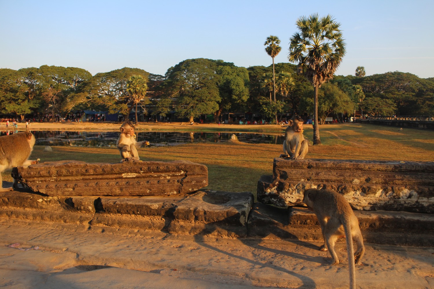 Monkeys angkor Wat