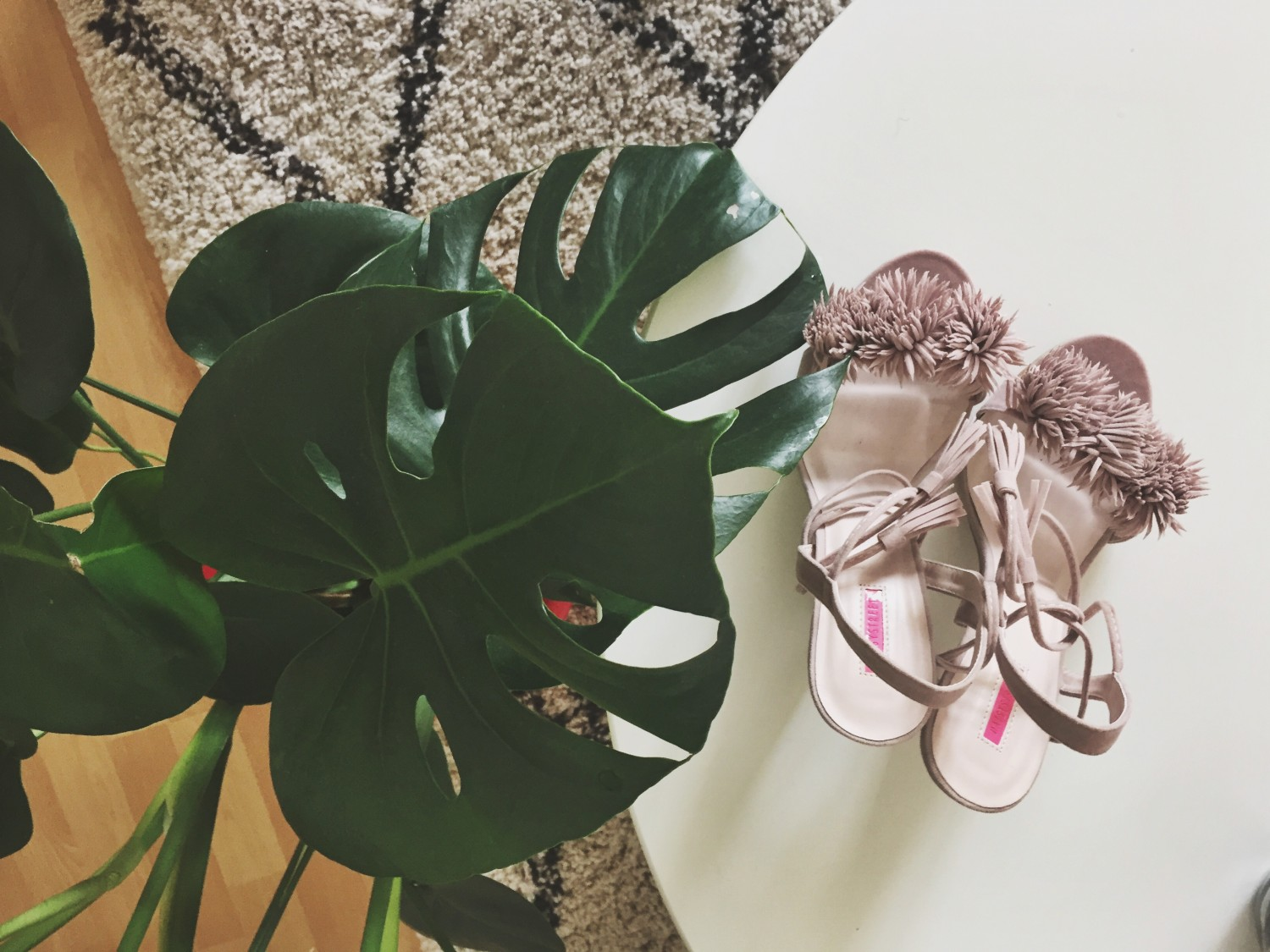 Monstera plant and high heels