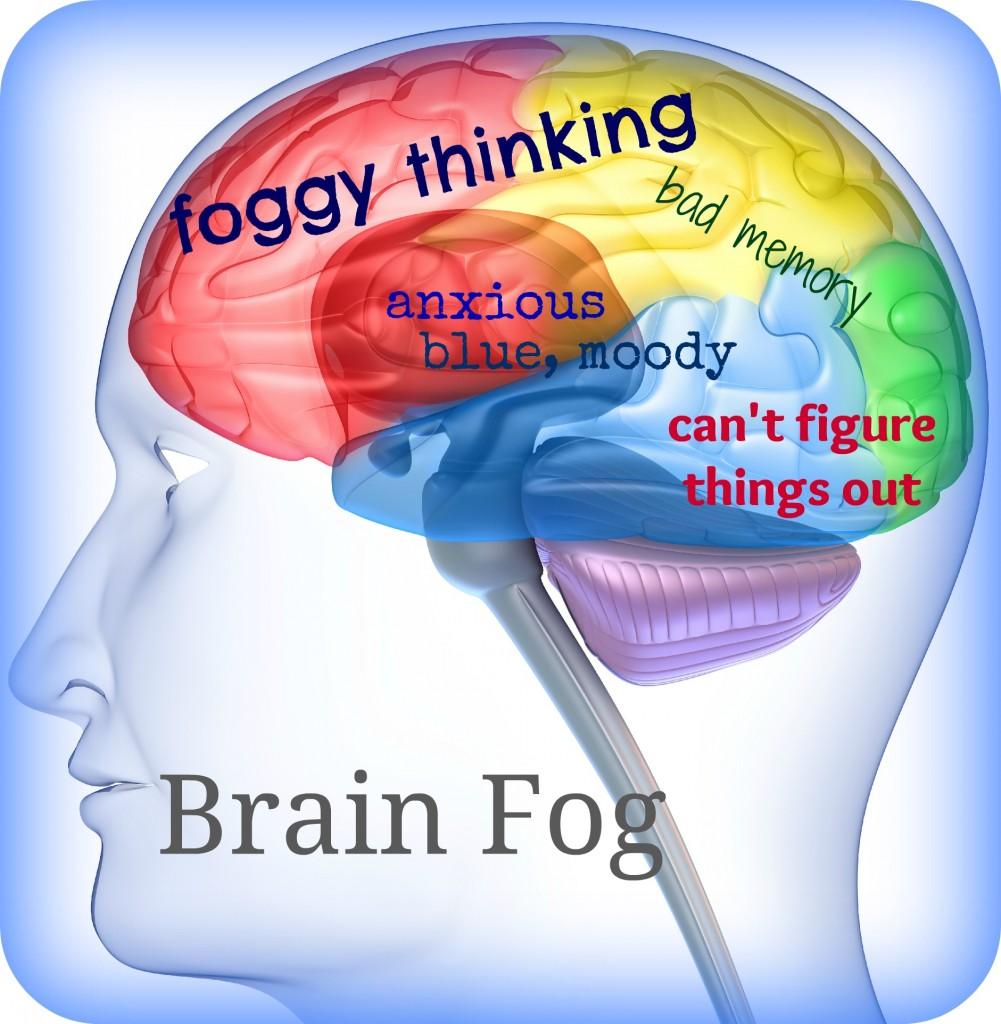 hjerne på engelsk