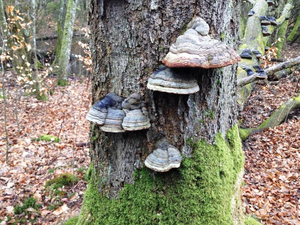 Fra skoven i Vattenriket