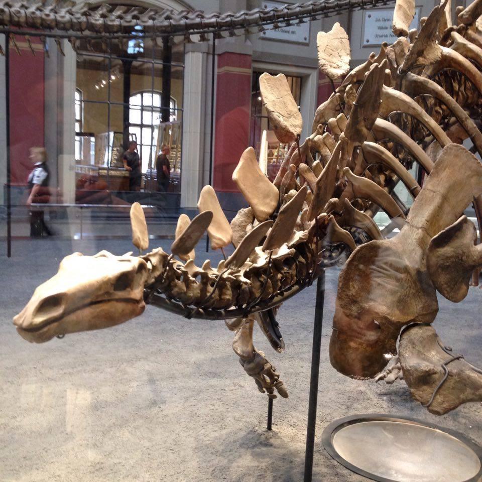 Naturhistorisk museum 2