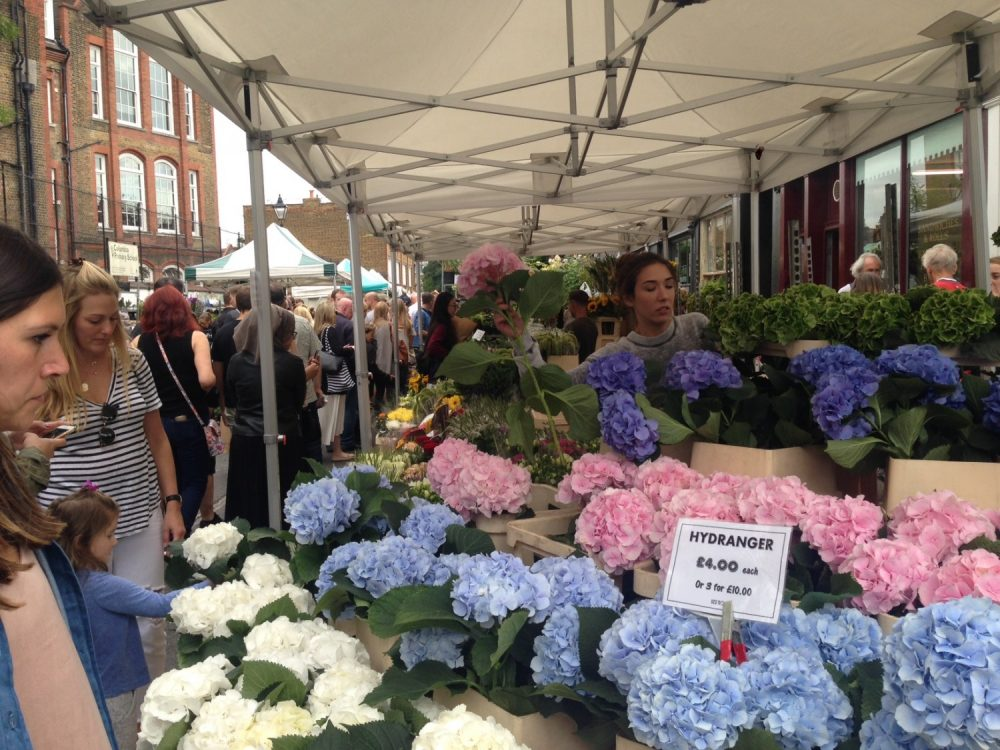 Hortensia på Folk på Solsikker på Columbia Road Flower Market i London