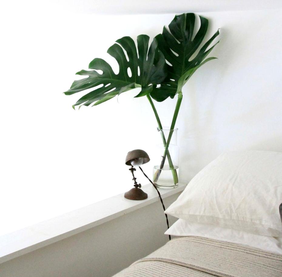 bed_monstera_erinboyle_gardenista