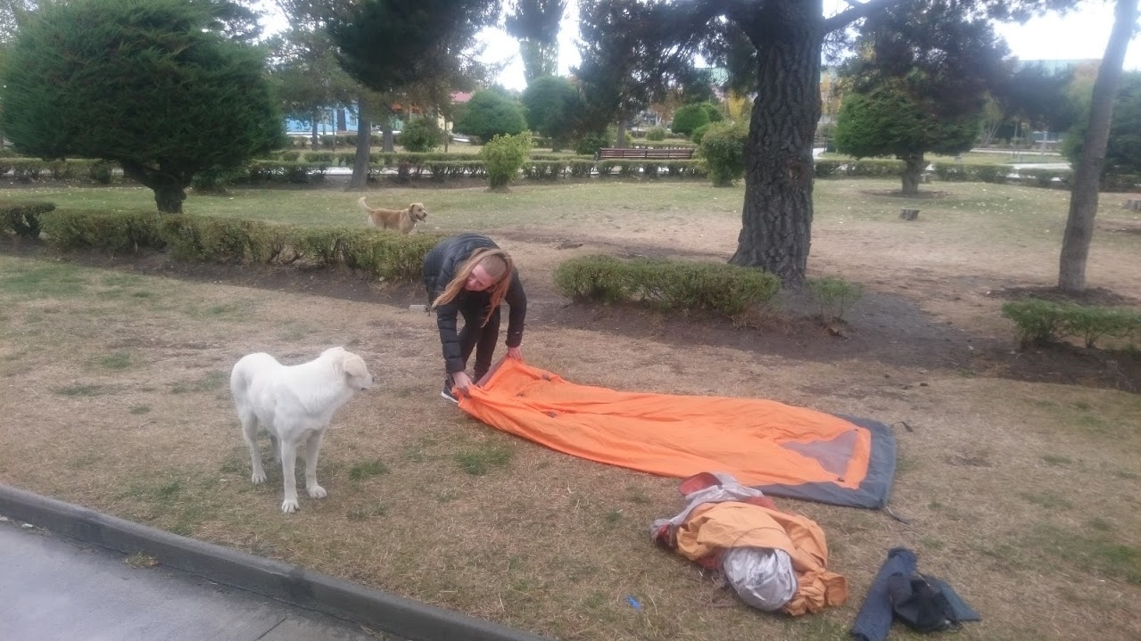 Vi øver teltopsætning inden afhang til Torres del Paine - Hund hjælper!