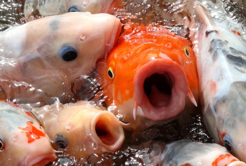 коэффициент картинки рыба с открытым ртом никто запрещает