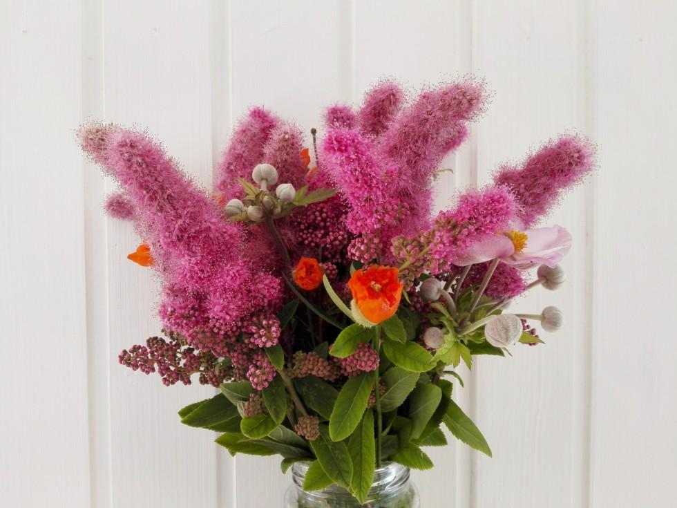 blomster fra kolonihaven