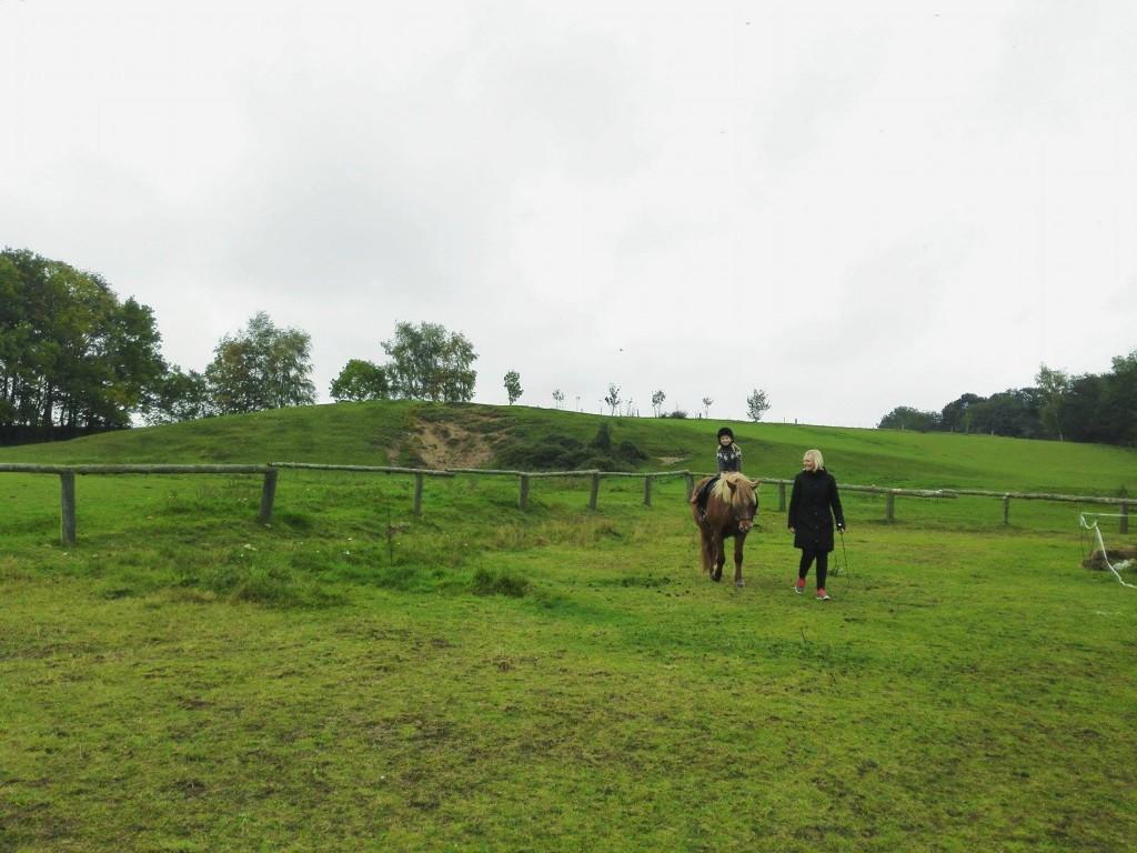Strib familieblog hestepige