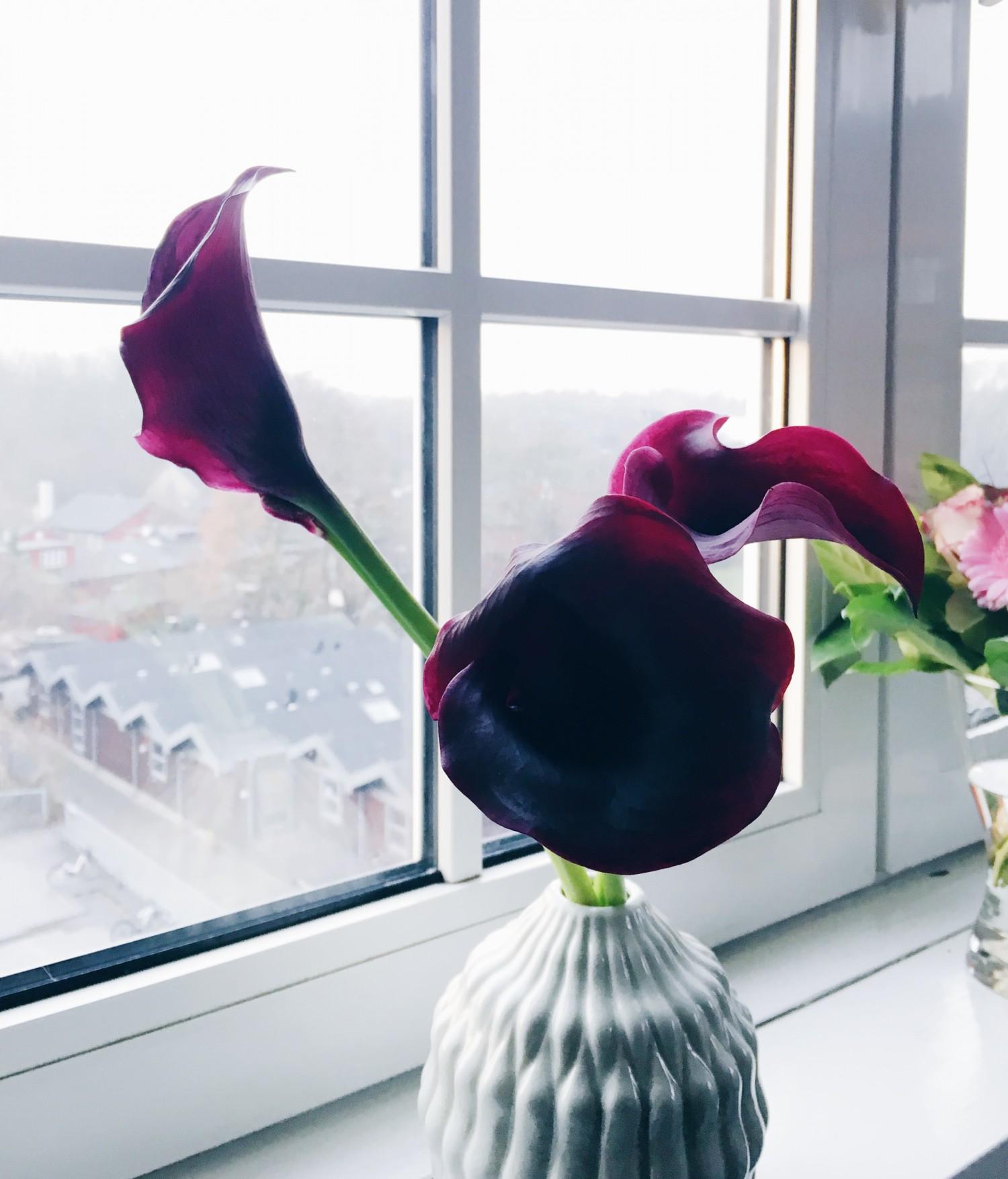 mørk lilla kala