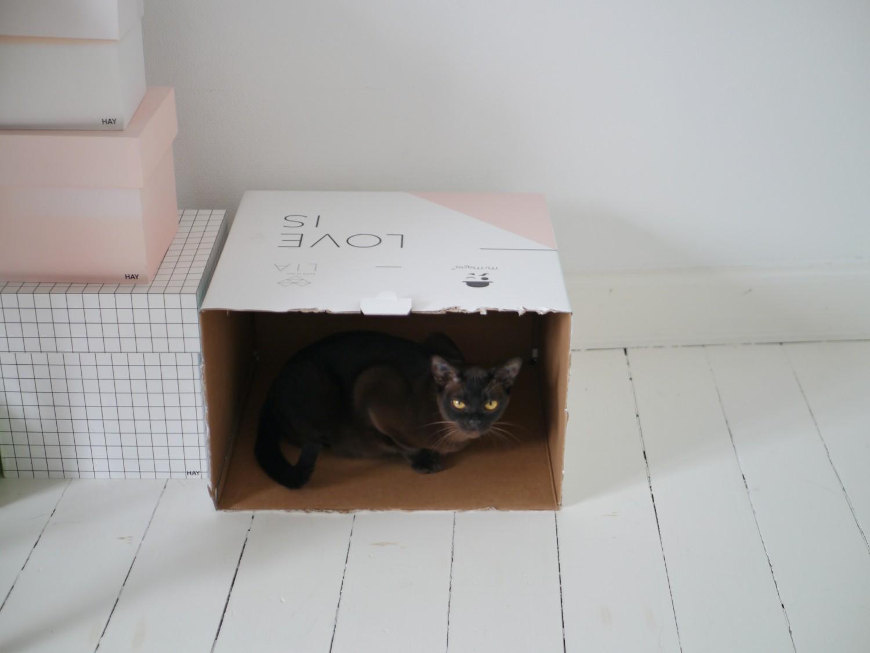 kattefødsel burmeser