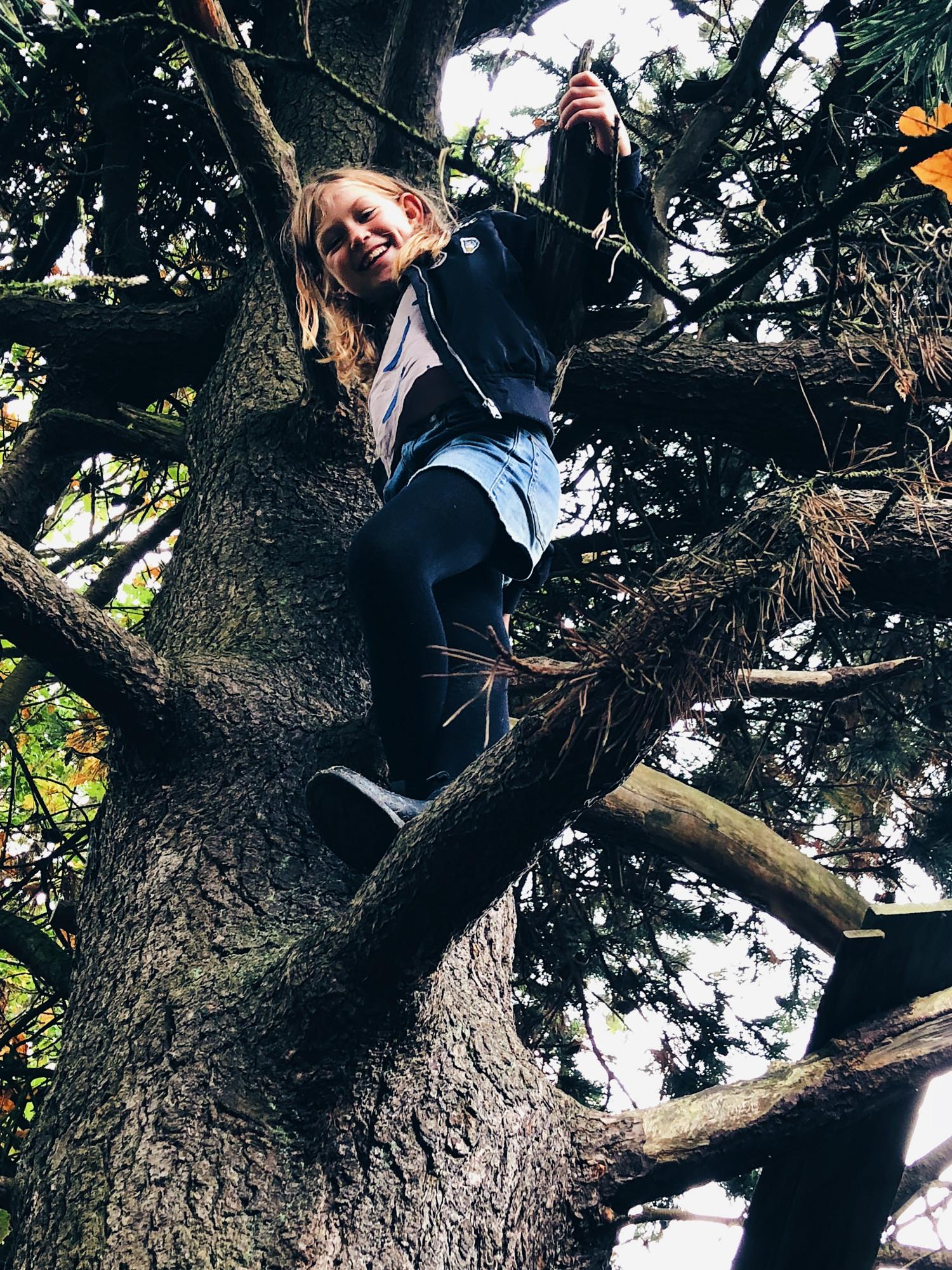 klatretræet i strib