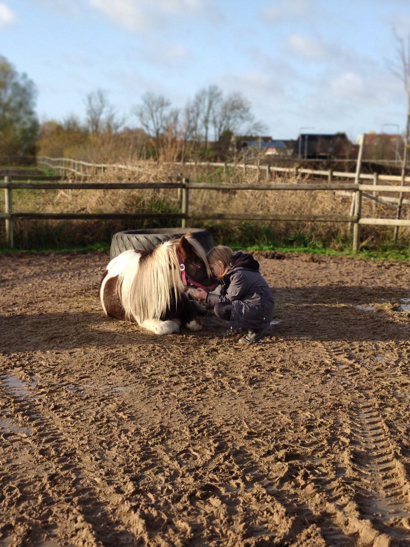 kategori 3 pony salg