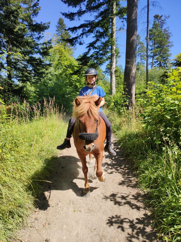 budget hest - rød islænder