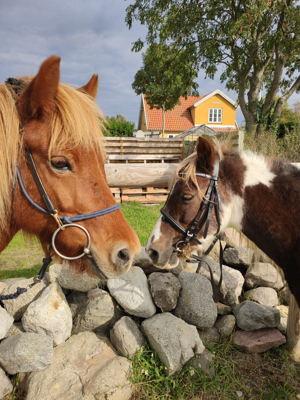 mor datter hest