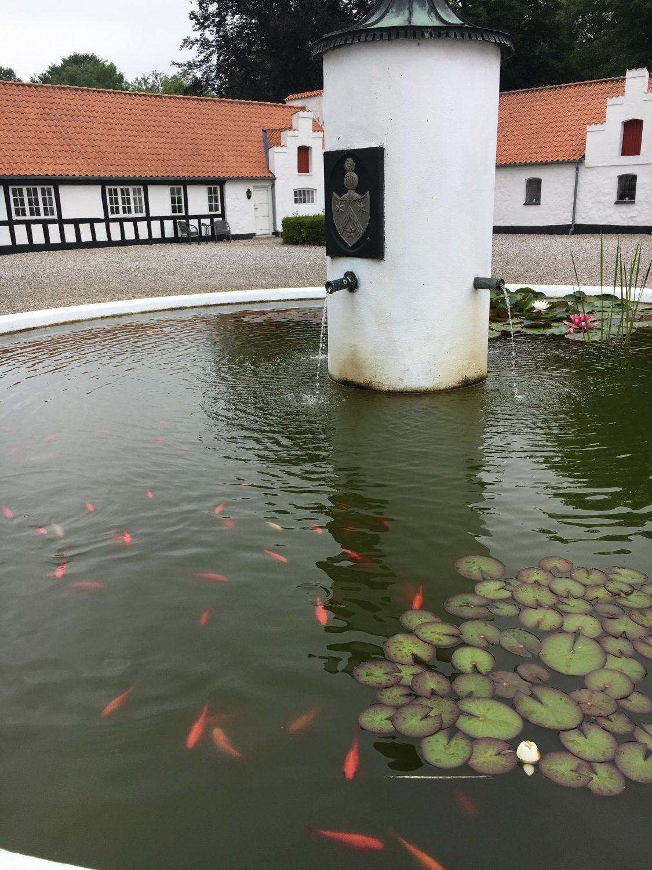Brønden med masse af guldfisk