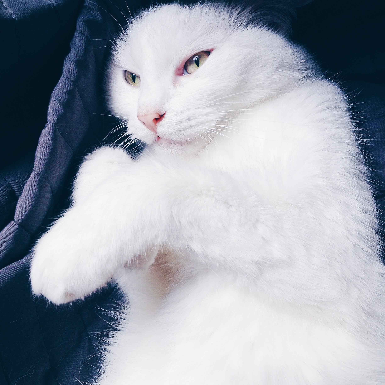 Vi glæder os til mere plads, Den gode uge kat emma Nelle noel noell