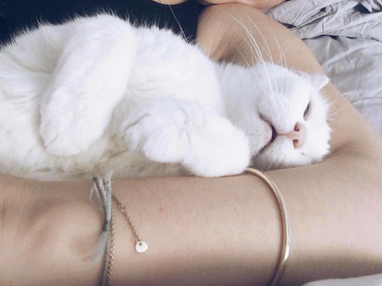 Kat Den gode uge fyldt med kærlighed nelle noell positiv uge