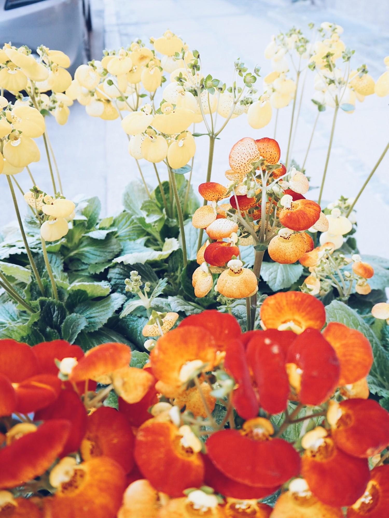blomster Den gode uge fyldt med kærlighed nelle noell positiv uge