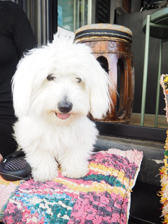 Den gode uge hvid hund