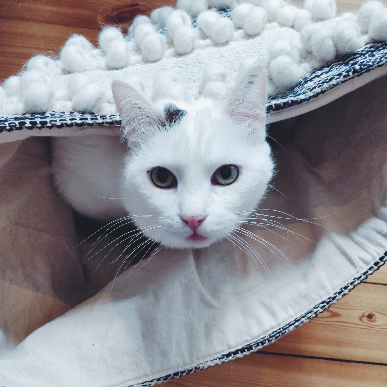 emma-kat-nelle-noell-hvid-kat