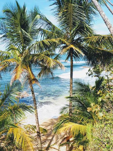Puerto Viejo guide Costa Rica