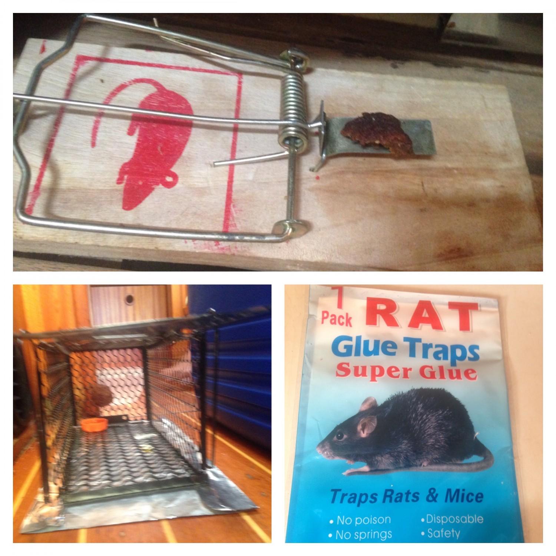 Så er rotte-pakken fundet frem igen...vi bare elsker det!