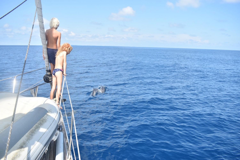 Legesyge delfiner og glade børn