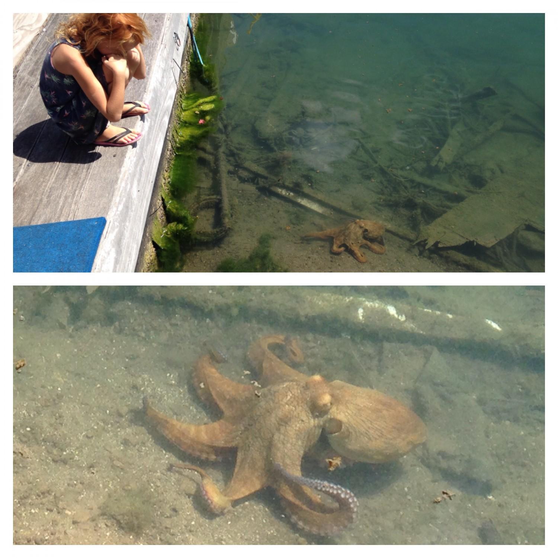 Der er igen tid og ro til at få øje på blæksprutter, rokker og havskildpadder.