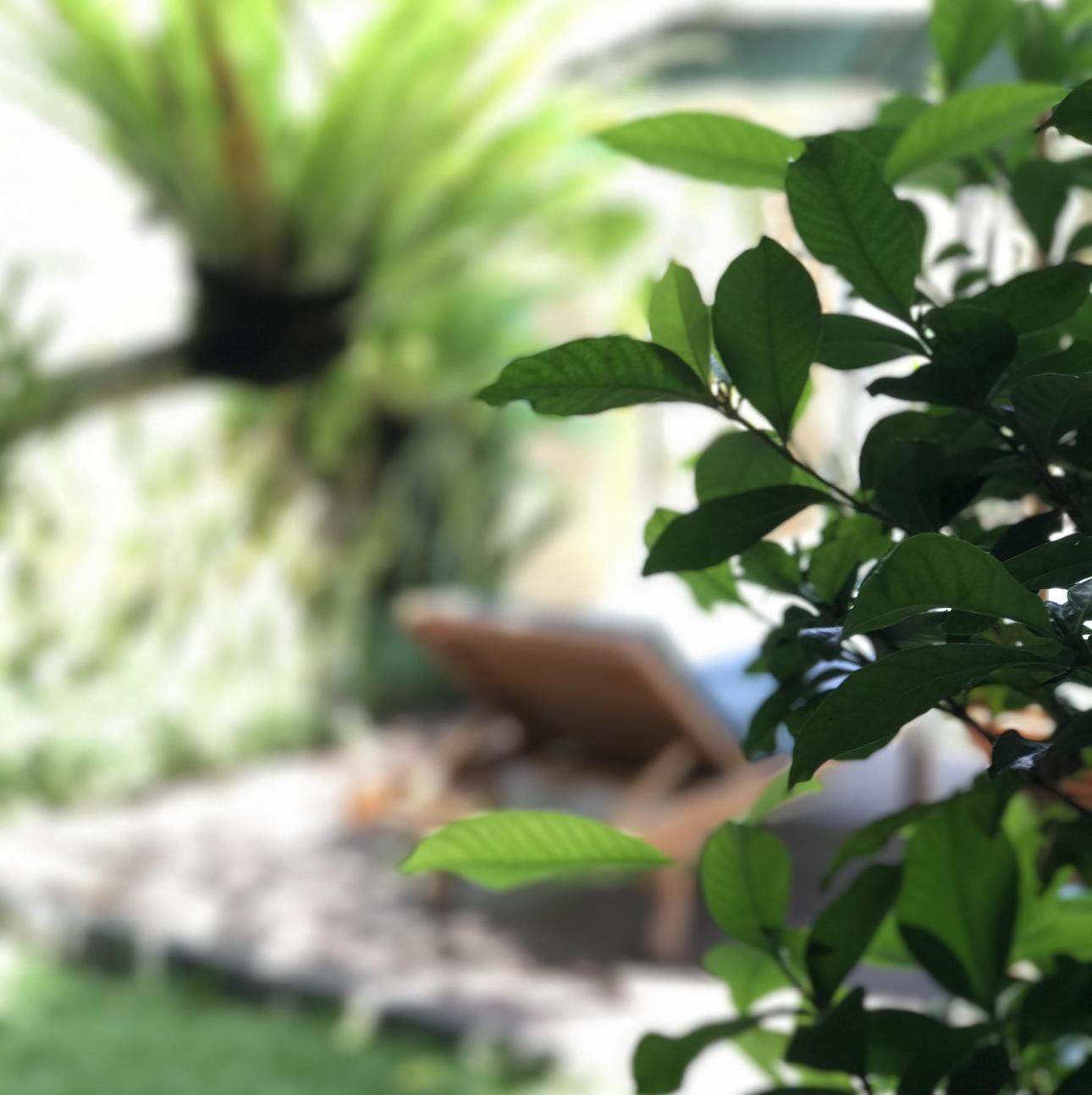 Ubud er ren afslapning, kultur og spandevis af røgelse. Der er grønt og frodigt og NEJ (!!), der regner faktisk ikke altid - selvom bygerne kan være temmeligt vilde!