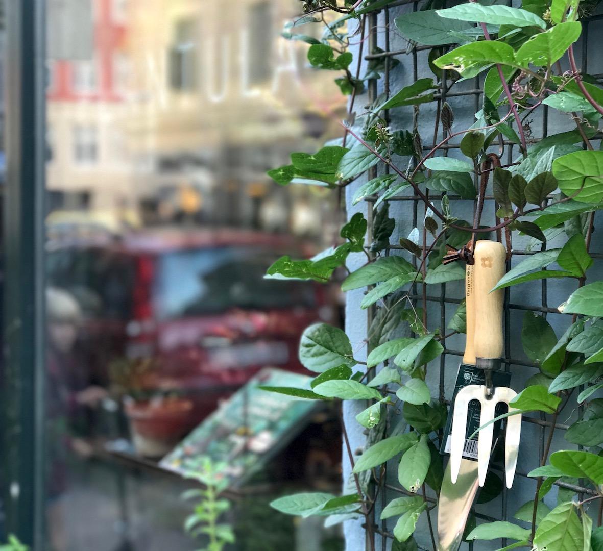 plantula saxogade urbannotes.dk
