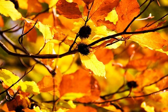 Efterårsfarver