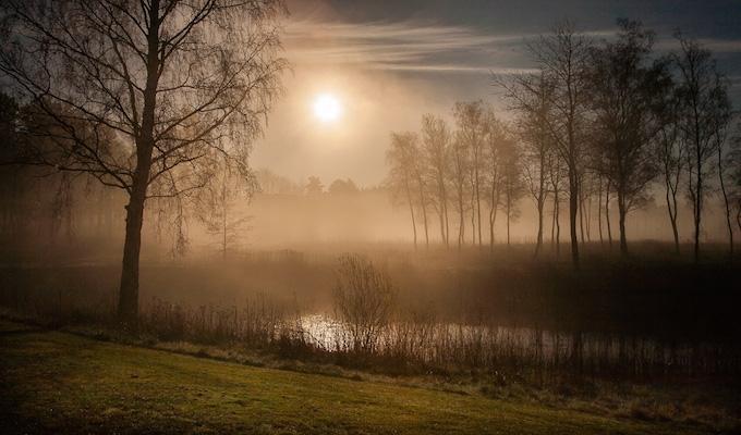 Onde, onde birketræer. Foto: Peter Bros Nissen