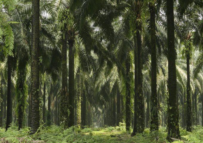 Hele L'Oréals forbrug af palmeolie stammer fra bæredygtige kilder. Foto: L'Oréal