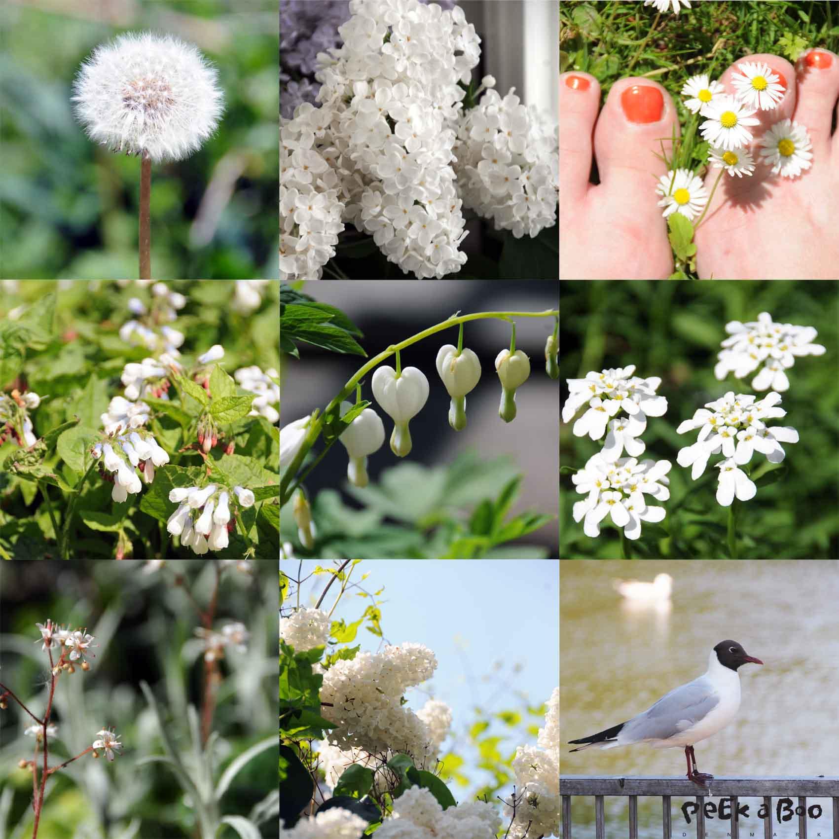 collage maj 2012