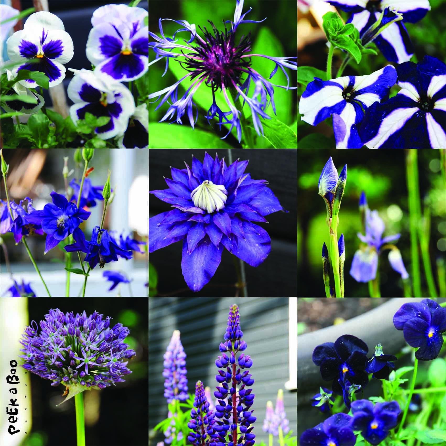 Collage purple flowers