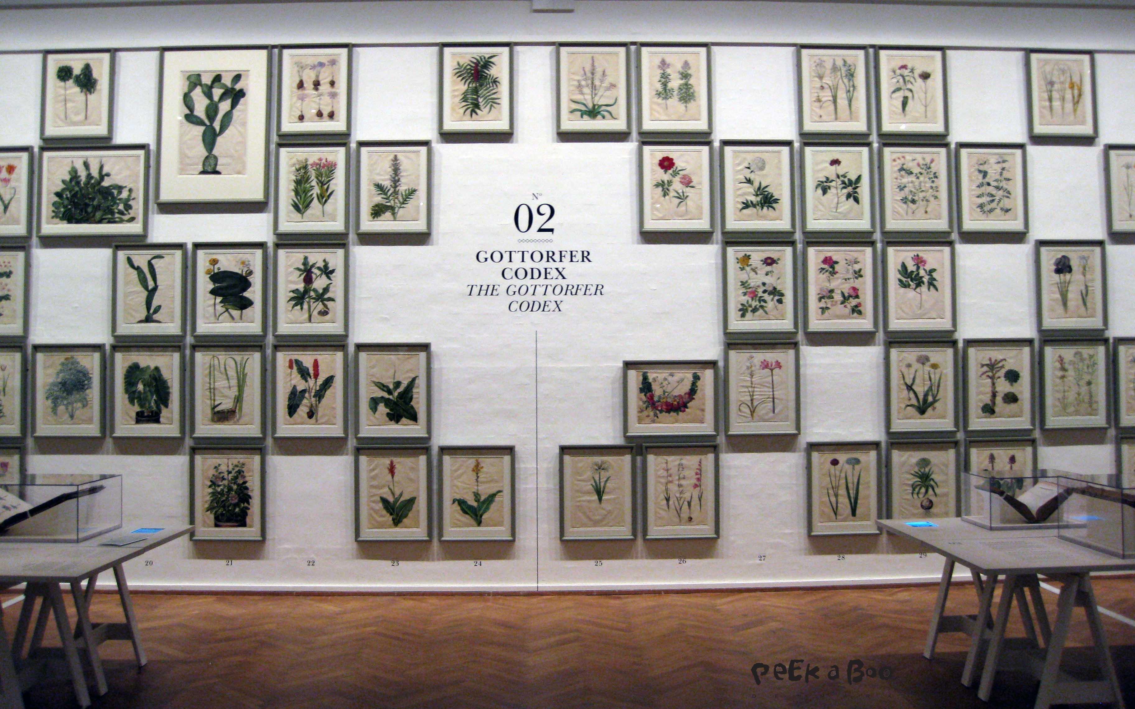 Gottorfer Codex malet på kalveskind.