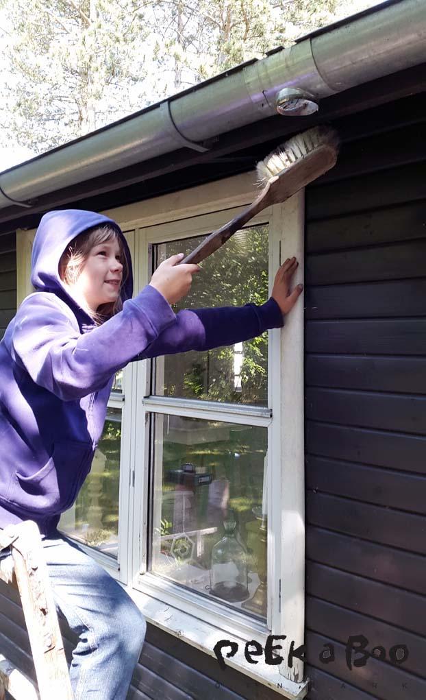 Flora havde tjansen som rengøringsmusen...så hun fjernede alle spindelvæv og skidt der måtte være på vægge og under udhæng.