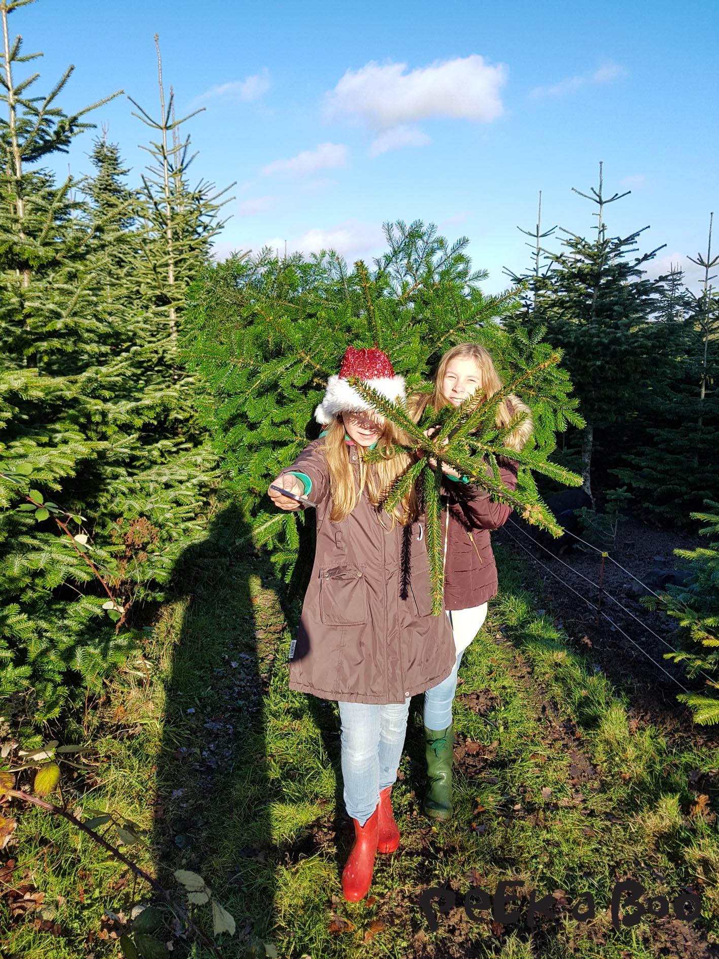 Men den dag blev det ikke mere drastisk end at vi fældede et flot juletræ og slæbte med hjem.