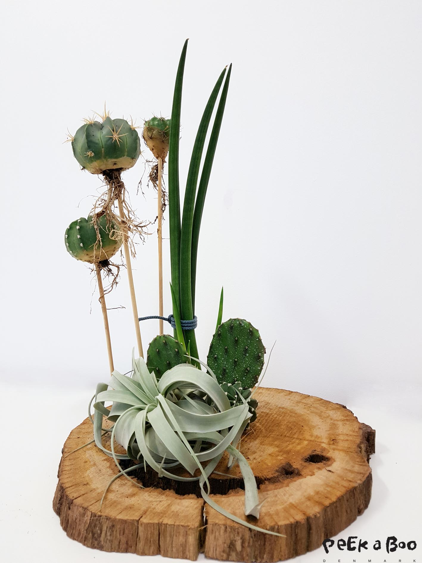 My cactus and airplant decoration from the workshop.